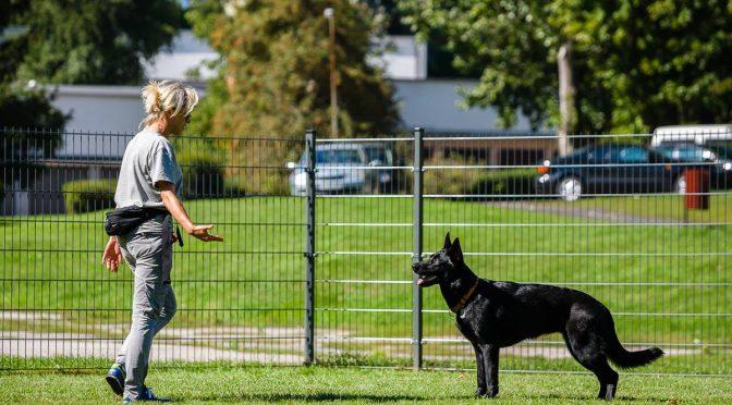 TBV dewastuje wybieg dla psów na ul. Koncertowej