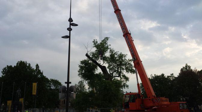 """140 lat minęło jak jeden dzień, czyli pożegnanie niemego świadka historii Lublina, drzewa """"Baobab"""""""