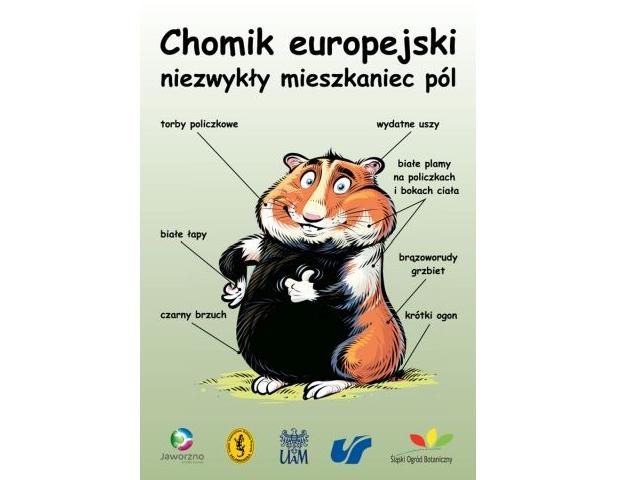Rzecz o chomiku europejskim żyjącym nadal w Lublinie pomimo obecności smogu i smoków